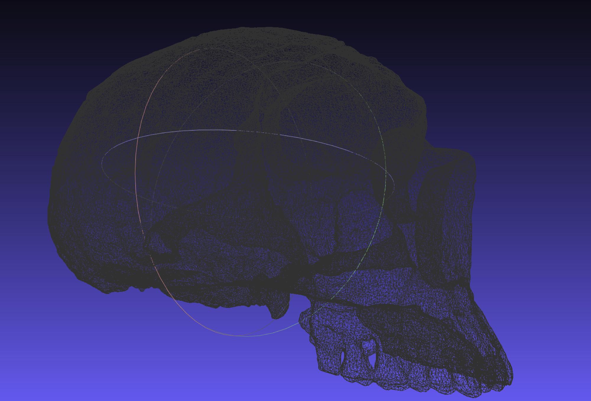 mesh_skull